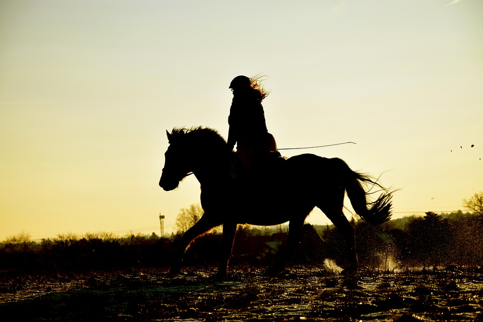 Blue Mountains Horse Riding Classes For Beginners