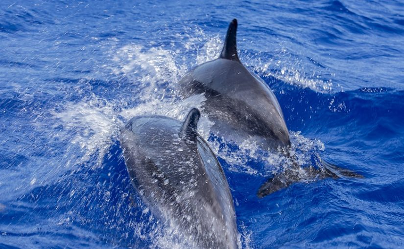What Happens On A Sunset Dolphin Cruise