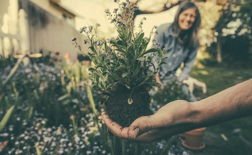 Career Options With Gardening Jobs Isle Of Wight