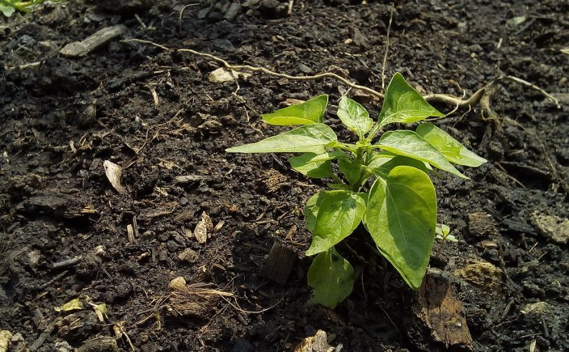 Plant A Tree Donation With The Plant A Tree App