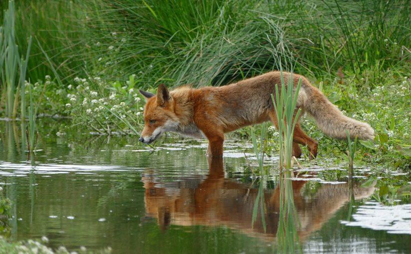Career Recap On Wildlife Photography Jobs