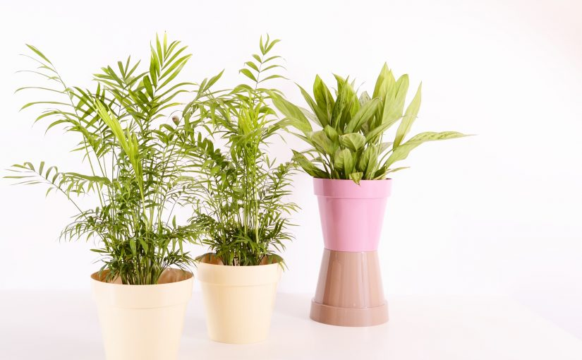 How To Buy Gallon Fabric Pots