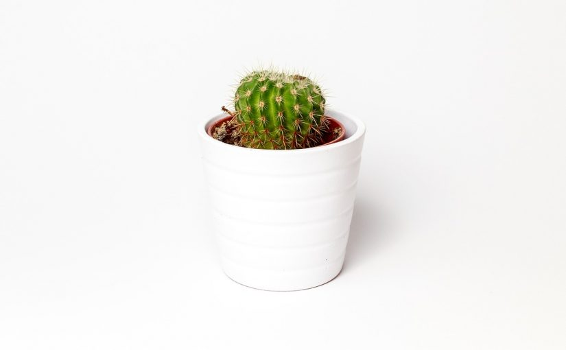Air Pots Are A Popular Choice For Indoor Gardens