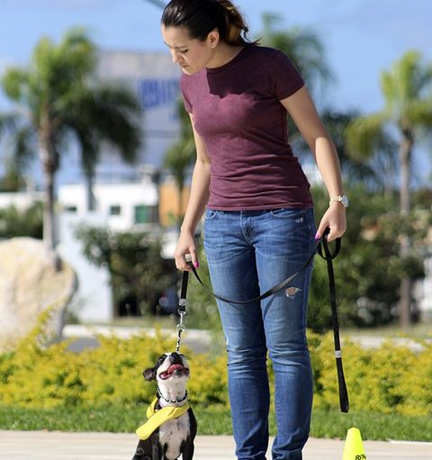 In Home Dog Training – Effective Dog Training At Home